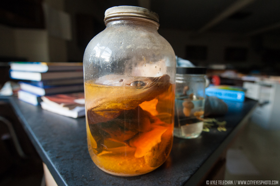 Just a preserved eel